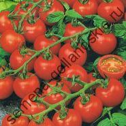 """Томат сорт """"НАСЛАЖДЕНИЕ САДОВОДА"""" (Gardeners Delight) 10 семян"""