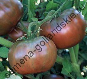 """Томат """"ПУРПУР ЧЕРОКИ БИО""""(Cherokee Purple BIO) 10 семян"""